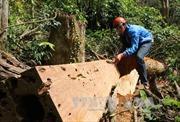 Phóng viên không tiếp cận được hiện trường vụ phá rừng lớn ở Gia Lai