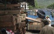 Lâm Đồng: Xe chở gỗ lậu tông chết cán bộ kiểm lâm