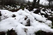 Sương muối đổ xuống vùng cao Sa Pa, Bát Xát
