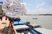 Ráo riết tìm kiếm đơn hàng xuất khẩu gạo