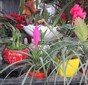 Xu hướng chơi hoa, cây cảnh Tết Ất Mùi