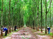 Hơn 20.000 lao động Việt Nam tại Lào
