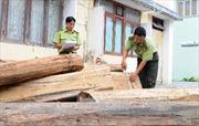 Quảng Nam xử nghiêm đối tượng vận chuyển gỗ trái phép