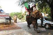 Đầu năm đến Đắk Lắk du lịch trên lưng voi