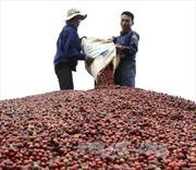 Cà phê Việt Nam xếp thứ 6 tại Mỹ