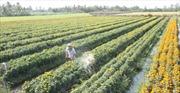 Tái cơ cấu ngành nông nghiệp gắn với xây dựng nông thôn mới