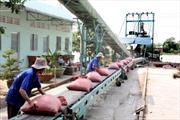 Mua tạm trữ 1 triệu tấn gạo từ ngày 1/3/2015