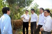Lai Châu tìm đường  thoát nghèo từ nông nghiệp