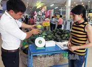 Quảng Nam không còn dưa hấu để thu hoạch