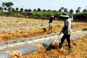 Giảm dần tiêu thụ nông sản biên mậu