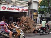 Hà Nội khẩn trương dọn cây đổ sau dông lốc