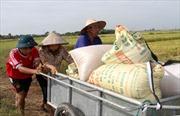 Nông dân đất lúa bỏ ruộng - Bài 1