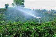 50.000 nông dân trồng cà phê được tập huấn tiết kiệm nước