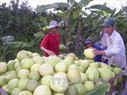 Trái cây Việt Nam sẵn sàng với TPP