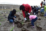 Nhật Bản trồng rừng trên... biển