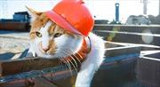 Mèo Mostik - Bùa hộ mệnh sống của cầu Crimea