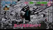 Du khách Trung Quốc phá hoa anh đào Nhật để chụp ảnh