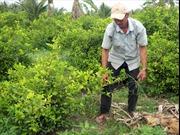 Cựu chiến binh hiến đất xây dựng nông thôn mới