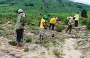 Cần làm rõ 1.700 ha đất lâm nghiệp ở An Khê biến thành đất sản xuất