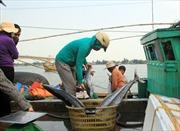 Làm sạch biển miền Trung như thế nào?