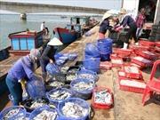 Chi trả 11,9 tỷ đồng cho các chủ tàu và lao động bị thiệt hại do sự cố môi trường biển