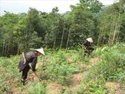 Giảm nghèo bền vững vùng dân tộc thiểu số