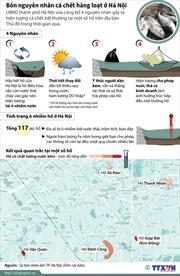 Bốn nguyên nhân cá chết hàng loạt ở Hà Nội