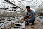 Nông dân sản xuất nông sản sạch