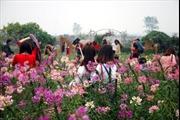Vườn hoa bãi đá sông Hồng: Điểm du lịch hấp dẫn dịp nghỉ lễ