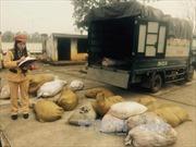 Hơn 2 tấn bì lợn thối bị bắt giữ