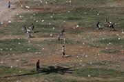 Máy bay Iraq rải truyền đơn cảnh báo tấn công ở Mosul