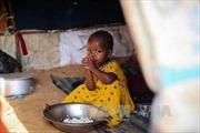 Somalia tuyên bố tình trạng 'thiên tai quốc gia' do hạn hán