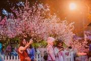 Người Hà Nội đội mưa xem hoa Anh đào Nhật Bản