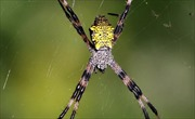 Phát hiện lý thú về loài nhện