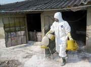 Xuất hiện ổ dịch cúm gia cầm mới
