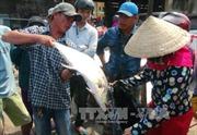 Ngư dân Quảng Trị ra quân khai thác vụ cá Nam