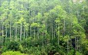 Bình Định đặt mục tiêu giảm 80% số vụ phá rừng và cháy rừng