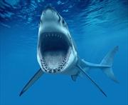 Vung 'cú đấm ngàn cân', chồng cứu vợ thoát khỏi hàm cá mập trắng
