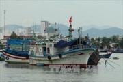 Triển vọng khai thác viễn dương từ tàu cá composite