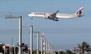 4.000 con bò sẽ 'bay' tới Qatar để tiếp tế sữa