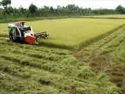 Nguồn vốn và giải pháp bền vững cho nông nghiệp đồng bằng sông Cửu Long