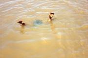 Ba học sinh đuối nước thương tâm