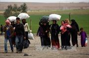 Cảnh báo IS bắt dân thường Syria làm lá chắn sống