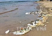 Cá, sò chết bất thường tại khu vực phía ngoài Nhà máy Nhiệt điện Vĩnh Tân 4