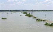Khai thác hiệu quả nguồn lợi thủy sản lòng hồ Trị An