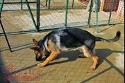 Phạt đến 1,6 triệu đồng và bồi thường thiệt hại nếu để chó thả rông cắn người