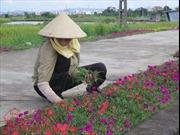 Sáng tạo trong bảo vệ môi trường nông thôn