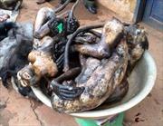 Lâm Đồng bắt quả tang quán thịt chó buôn bán động vật hoang dã