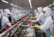 'Cú hích' cho tôm Việt tại thị trường châu Âu