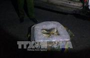 Tiêu hủy 3 tấn cá đông lạnh không rõ nguồn gốc
